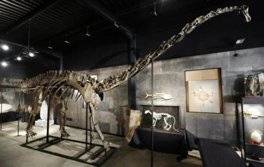 Female diplodocus dinosaur sells for $650,000 at a UK auction