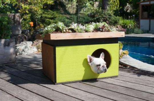 Eco-doghouse built by Modern Cabana