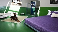 Pooch Hotel: An ultimate vacation experience for Silicon Valley dogs