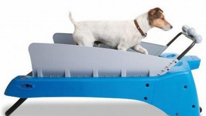 The Canine Treadmill for discerning pet owners