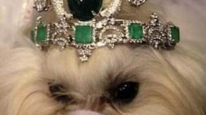 $4.2 million designer tiara for pampered poochie
