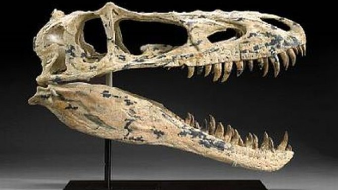 Rare dinosaur skull leads the Bonhams' Natural History auction